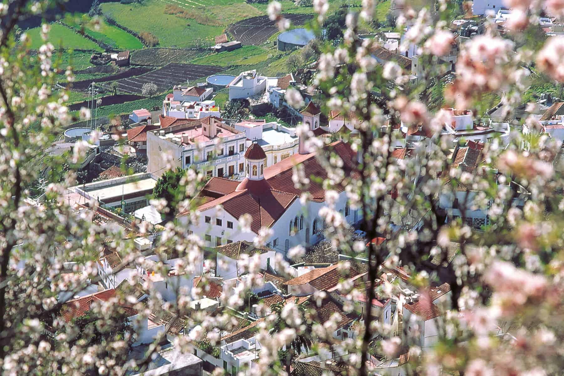 GranCanaria_fauna_village_Nygren_lind