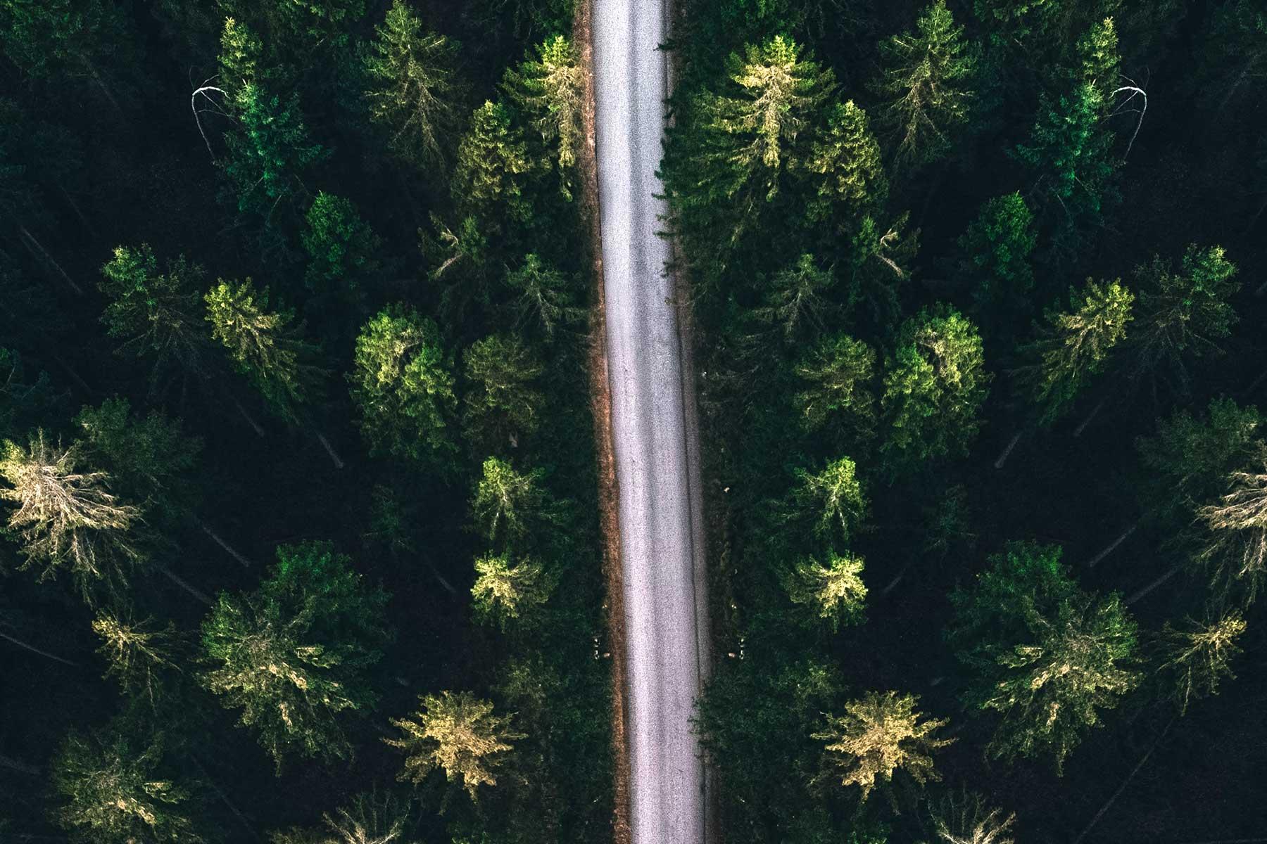 Resor-till-Öland-skog-Nygren-Lind-Resebyrå