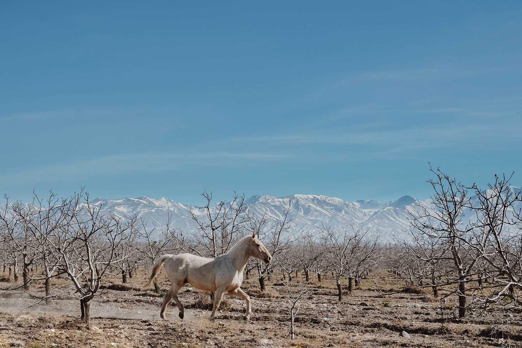 Resor-till-Argentina---djurliv-häst--Nygren-&-Lind-Resebyrå