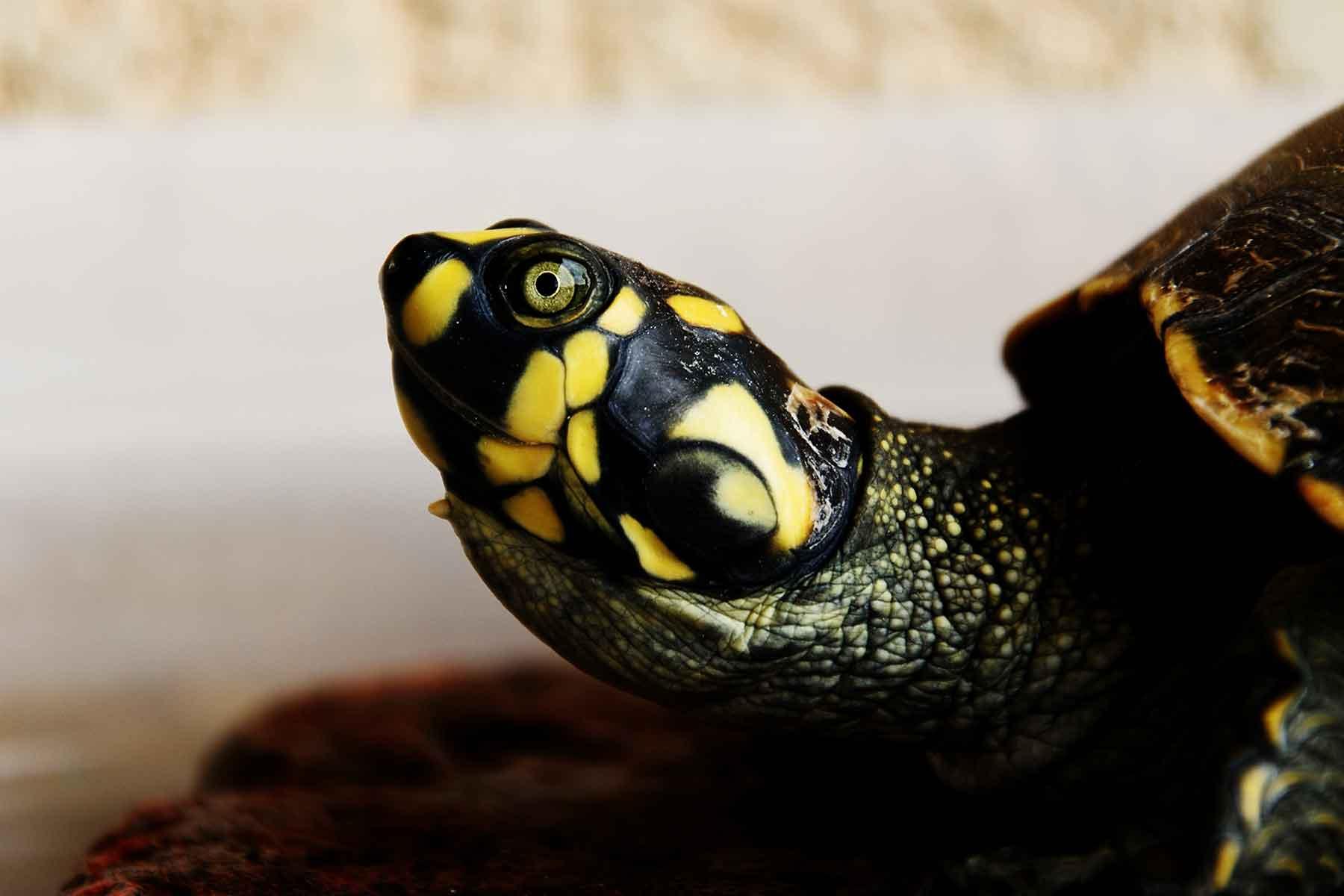 Resor-till-Bolivia-med-Nygren-&-Lind-Resebyrå---sköldpadda