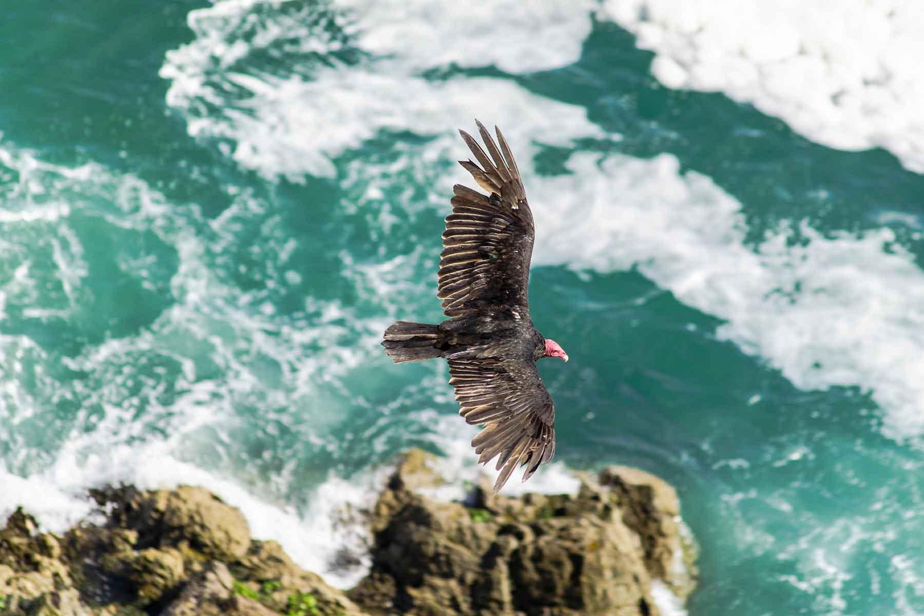 Resor-till-Chile-med-Nygren-&-Lind-resebyrå---stor-fågel