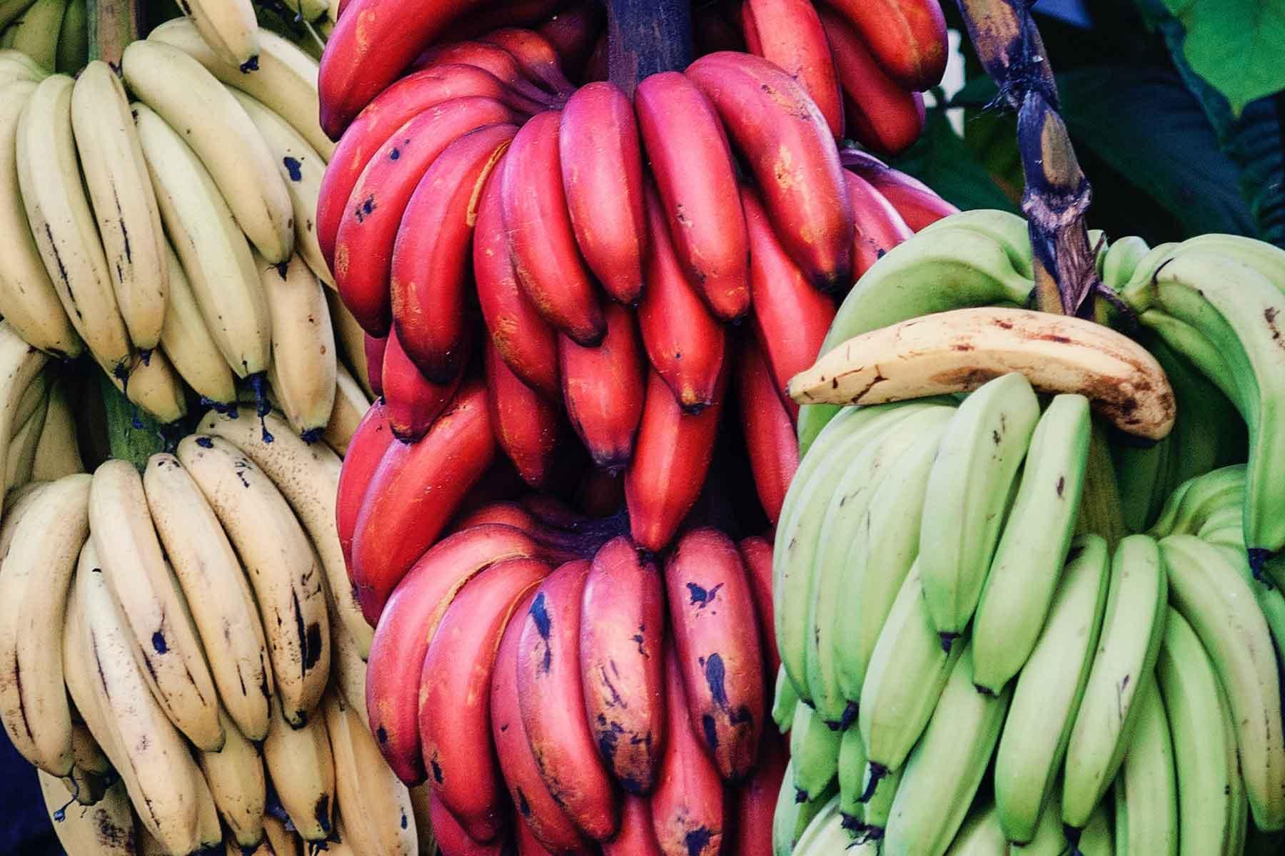 Resor-till-Costa-Rica-med-Nygren-&-Lind-Resebyrå---bananer