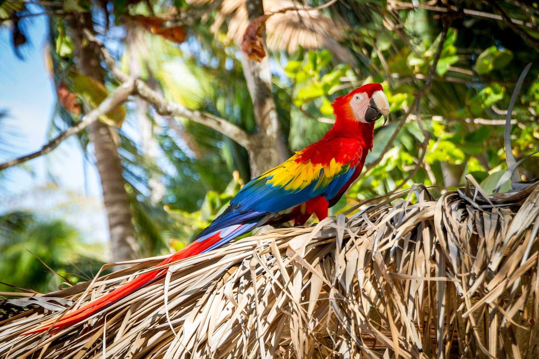 Resor-till-Costa-Rica-med-Nygren-&-Lind-Resebyrå---papegoya