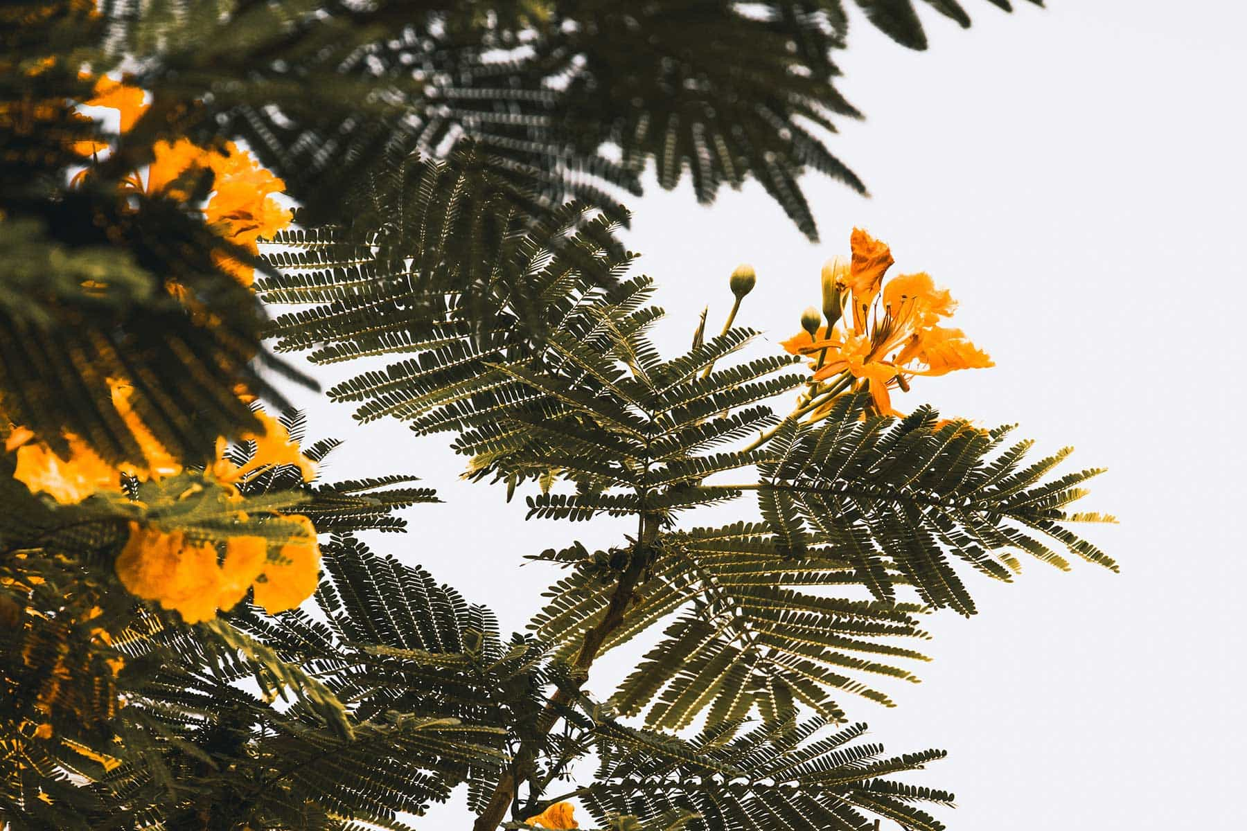 Resor-till-Dubai-med-Nygren-&-Lind-Resebyrå--blommor