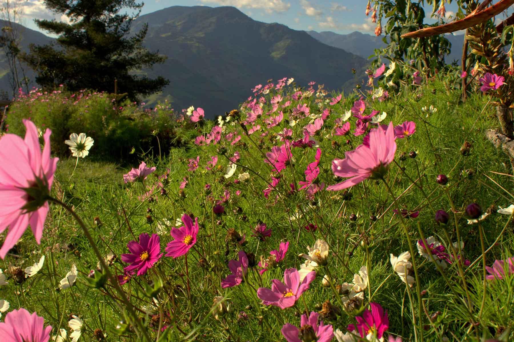 Resor-till-Ecuador-med-Nygren-&-Lind-Resebyrå---blommor