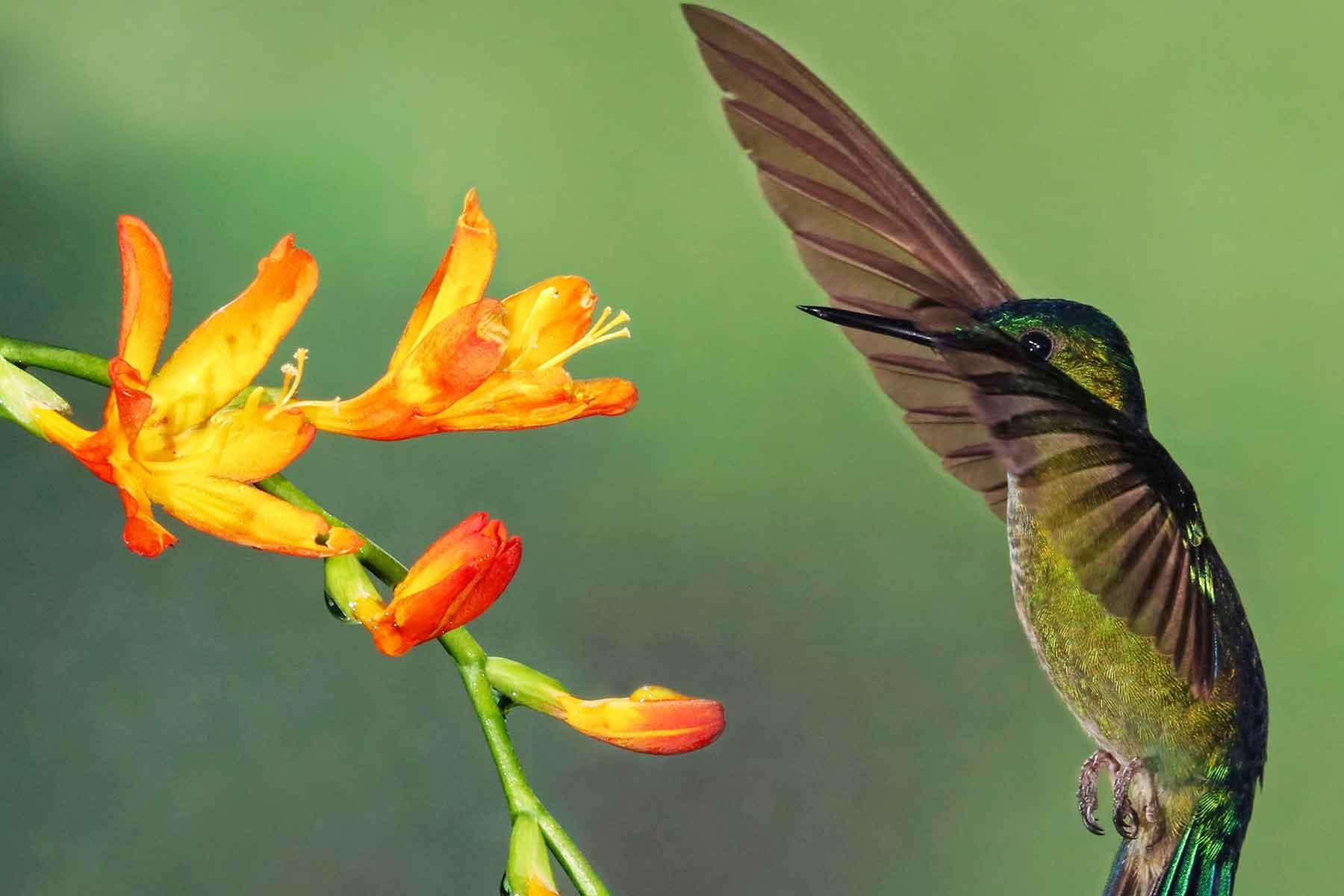 Resor-till-Ecuador-med-Nygren-&-Lind-Resebyrå---kolibri