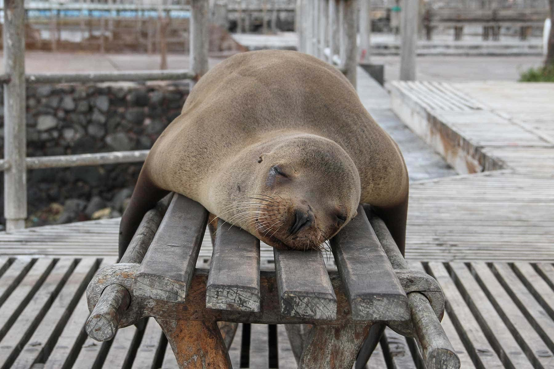 Resor-till-Galapagos-med-Nygren-&-Lind-Resebyrå---sel-trött
