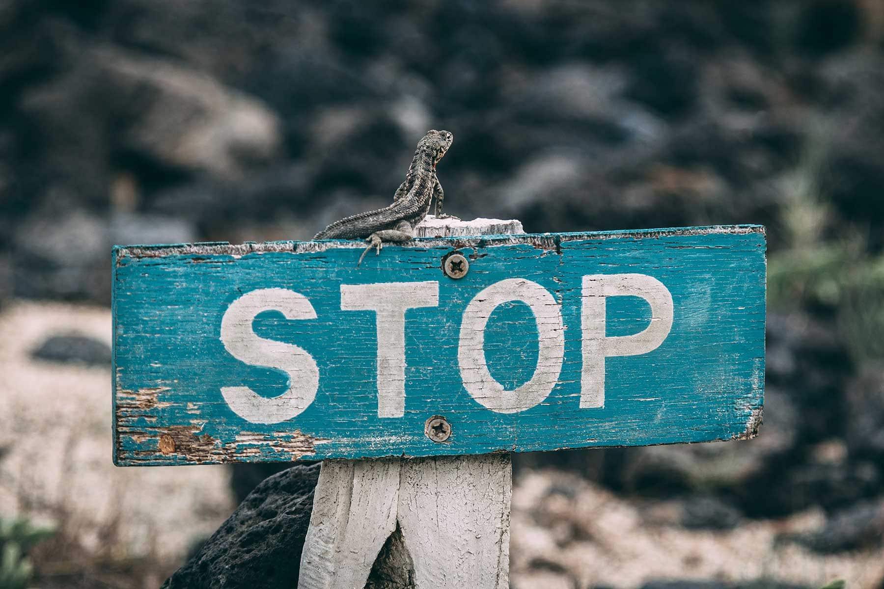 Resor-till-Galapagos-med-Nygren-&-Lind-Resebyrå---stop-skilt-med-ödla