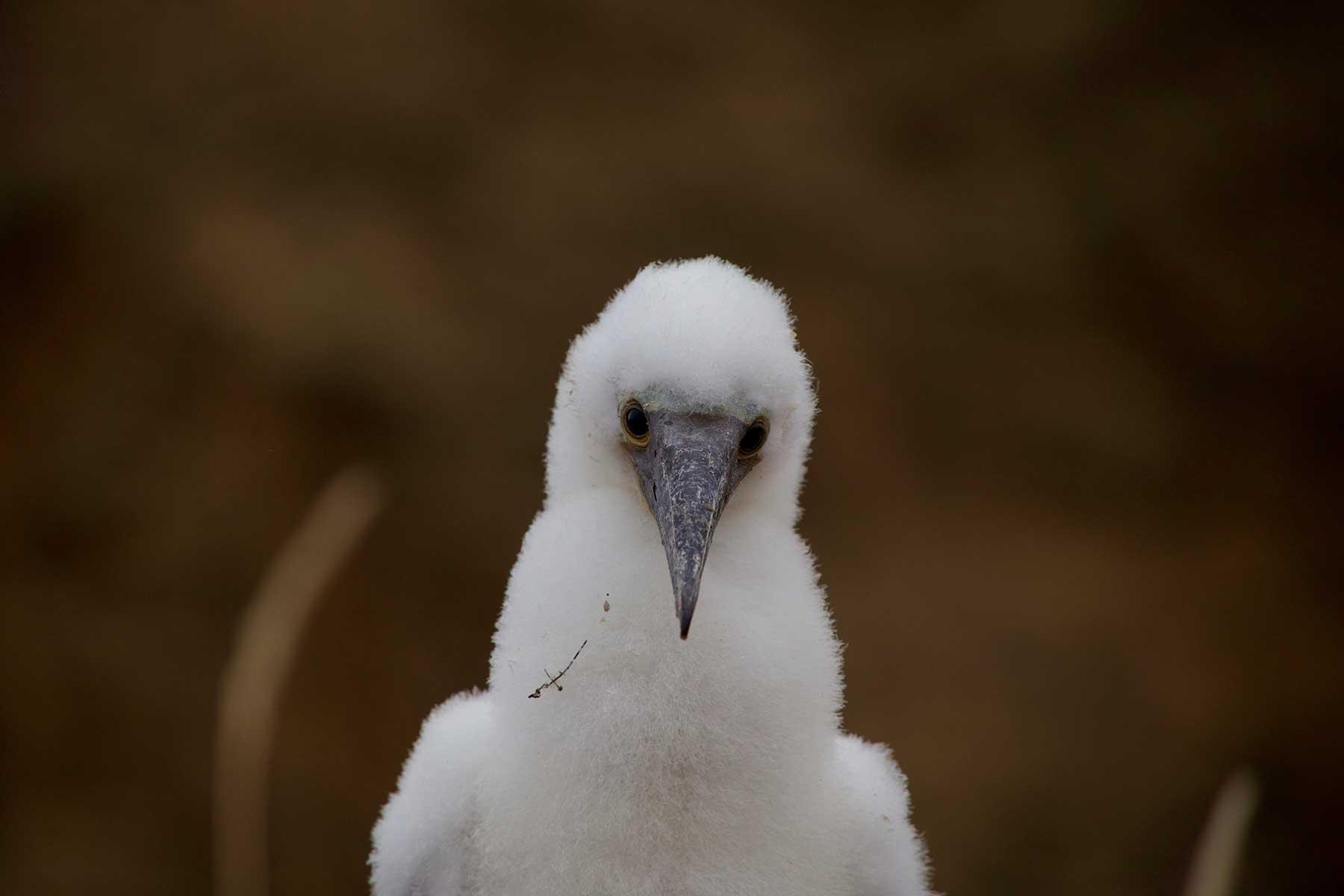 Resor-till-Galapagos-med-Nygren-&-Lind-Resebyrå---vit-fågel