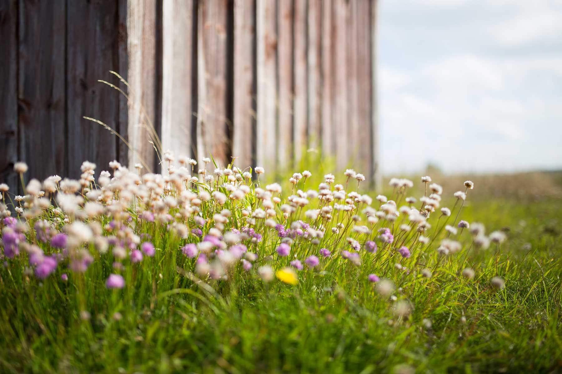 Resor-till-Gotland-blommor-Nygren-Lind-Resebyrå