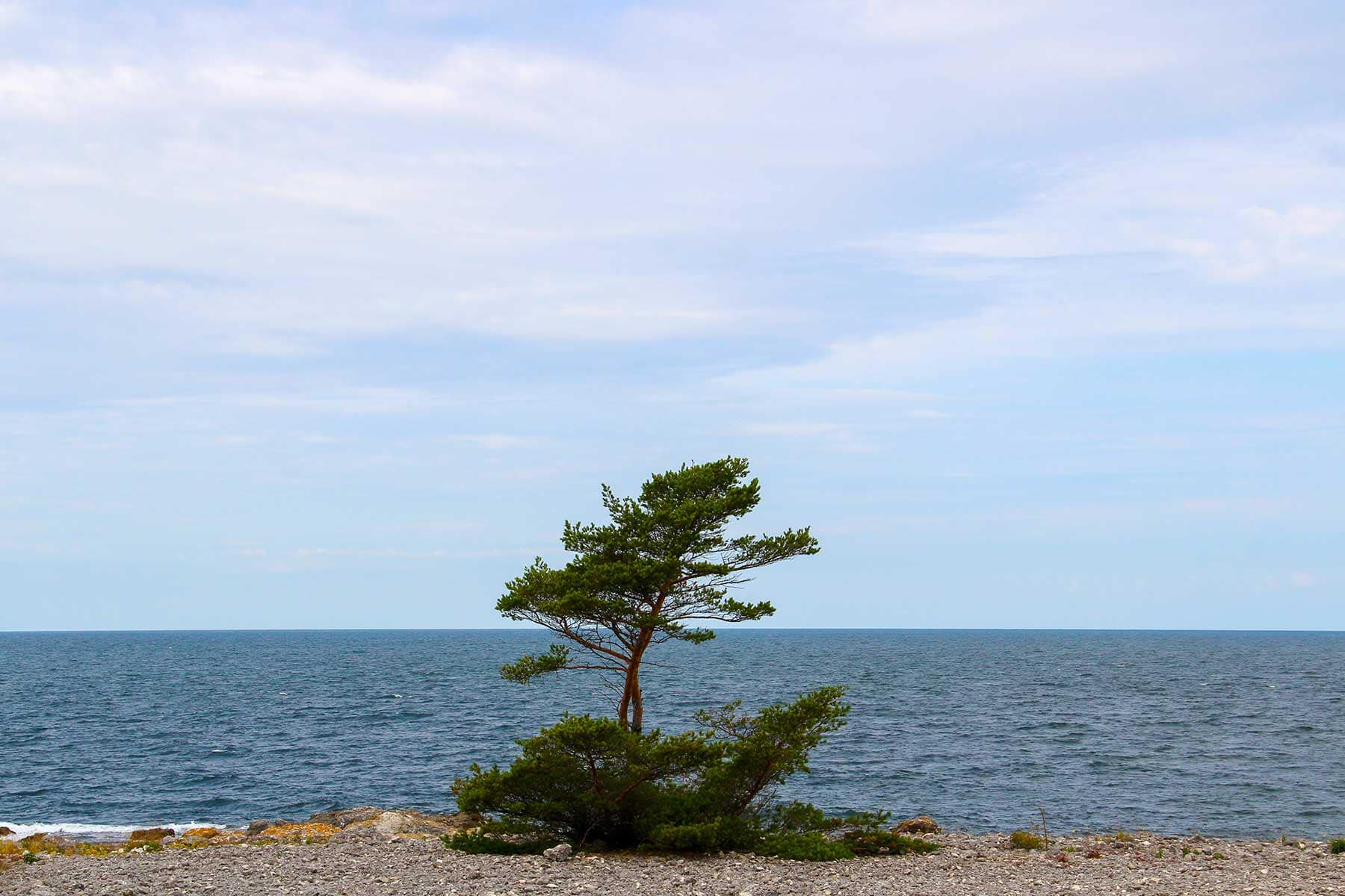 Resor-till-Gotland-trä-och-sjö-Nygren-Lind-Resebyrå