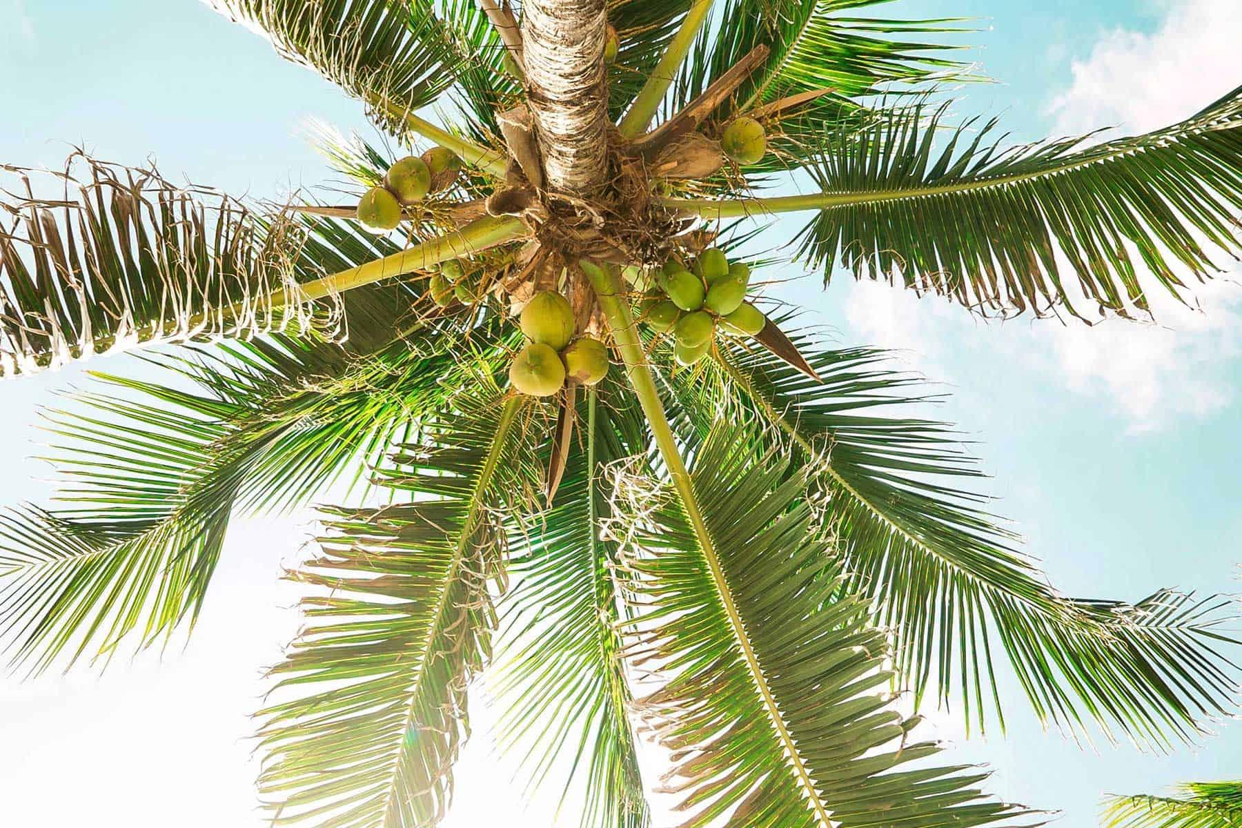 Resor-till-Koh-Samed-i-Thailand-Palm-med-Nygren-och-Lind-resebyrå