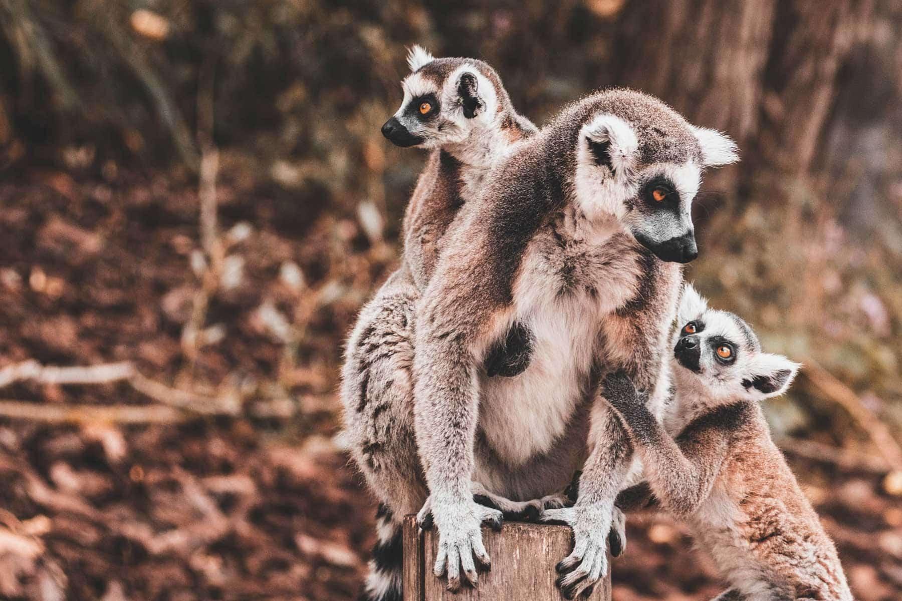 Resor-till-Madagaskar---djurliv---Nygren-Lind-Resebyrå
