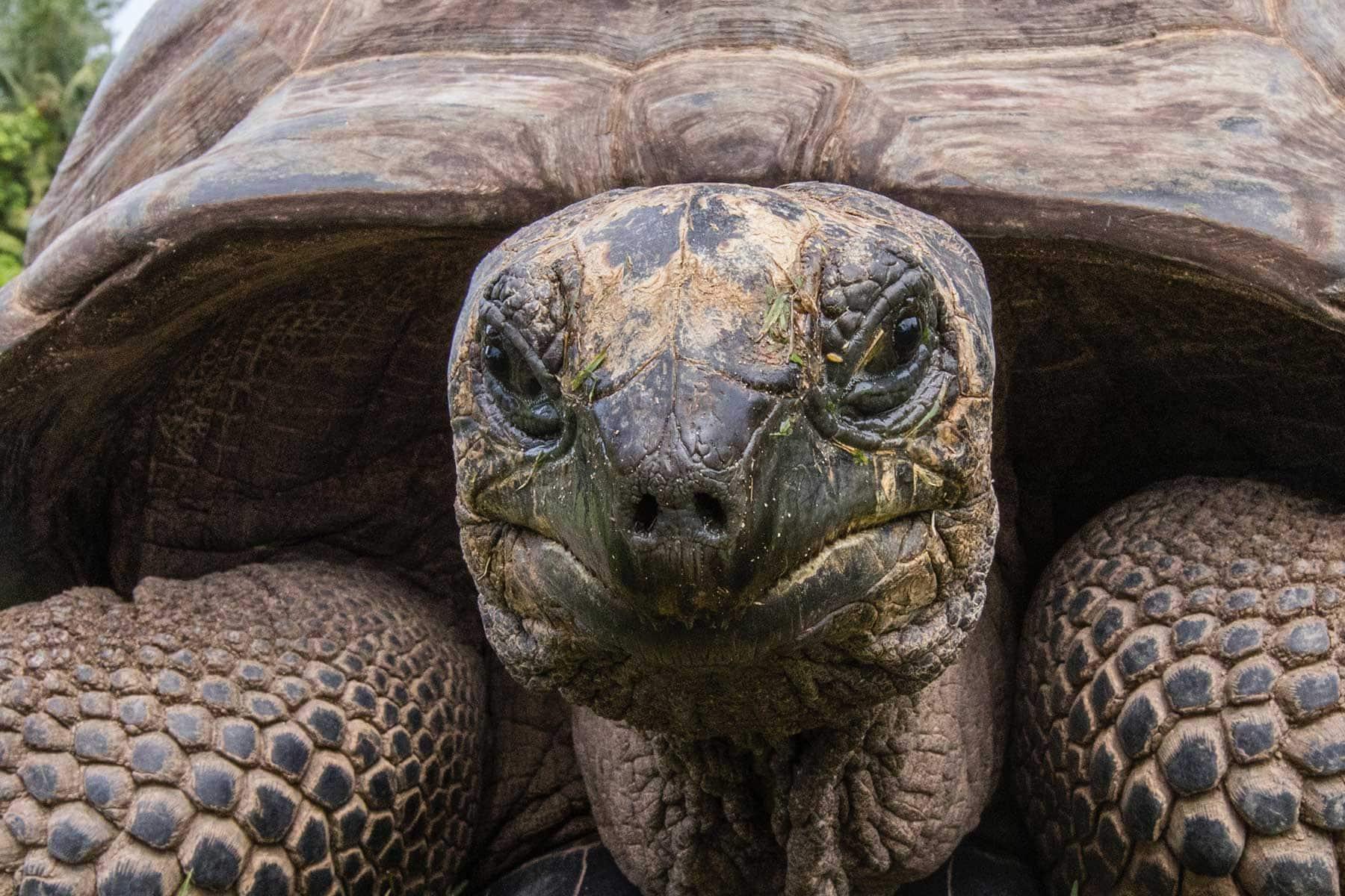Resor-till-Mauritius-med-Nygren-&-Lind-resebyrå--sköldpadda