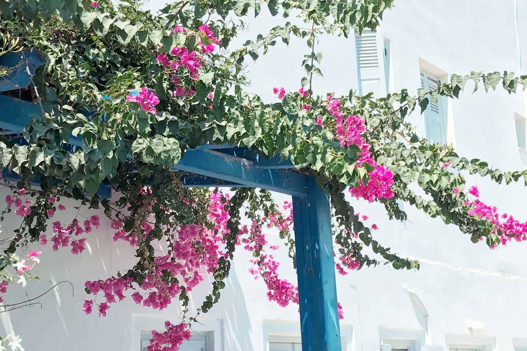 Resor-till-Spetses-i-Grekland-med-Nygren-&-Lind-Resebyrå