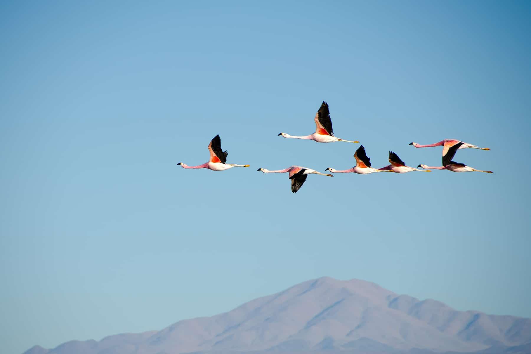 Resor_Colombia_Flamingos_Nygren_Lind_Resebyrå