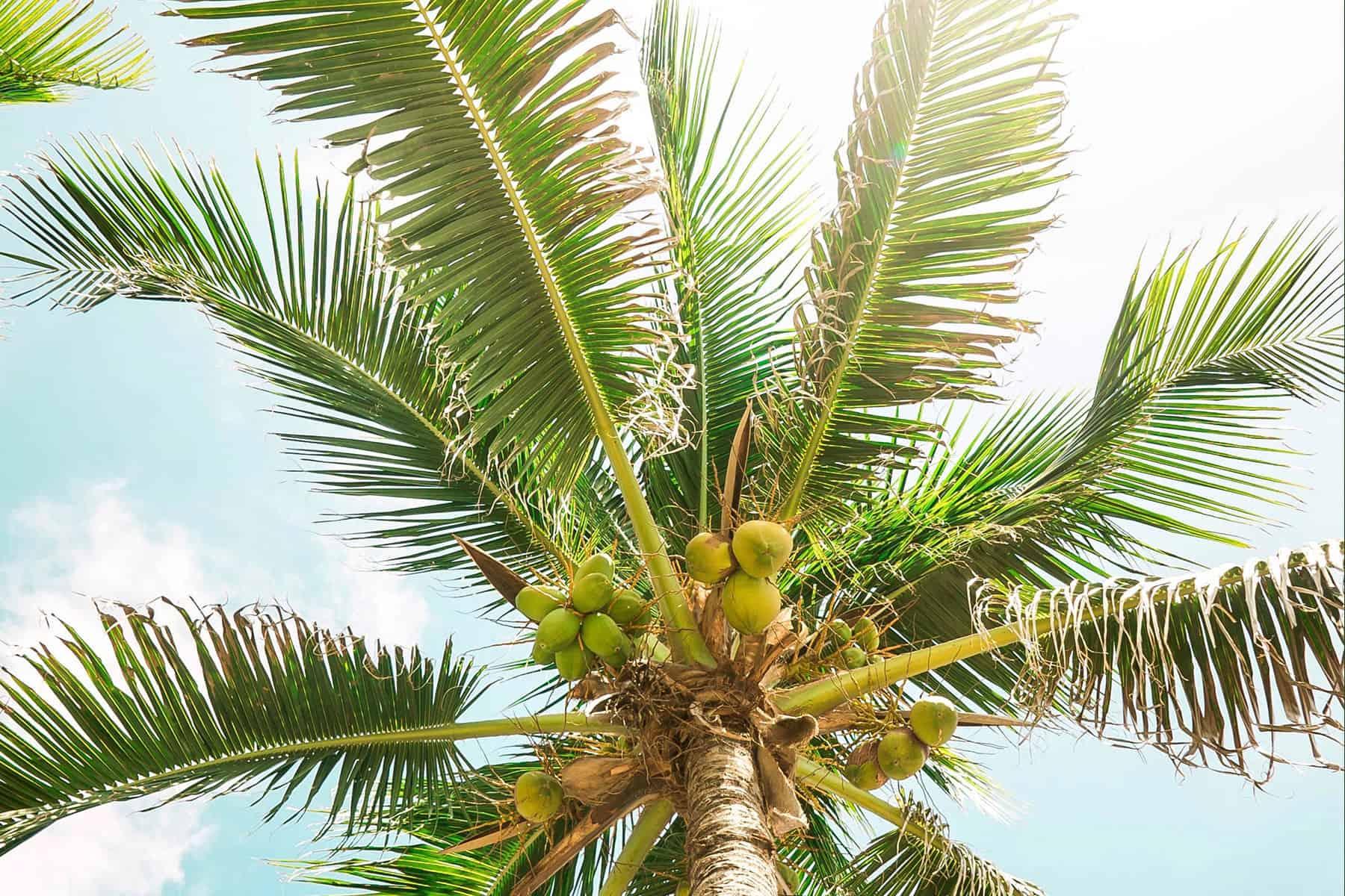 Resor_till_Cancun_i_Mexico_Palm_med_Nygren_Lind_Resebyrå
