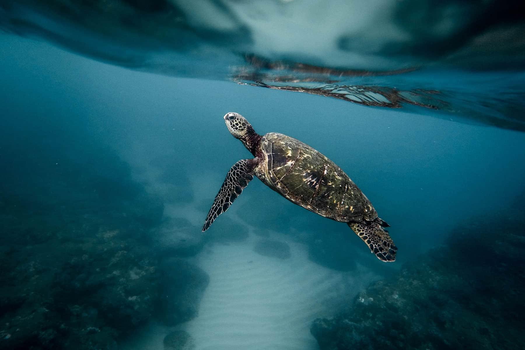 Resor_till_Cancun_i_Mexico_Sköldpadda_med_Nygren_Lind_Resebyrå