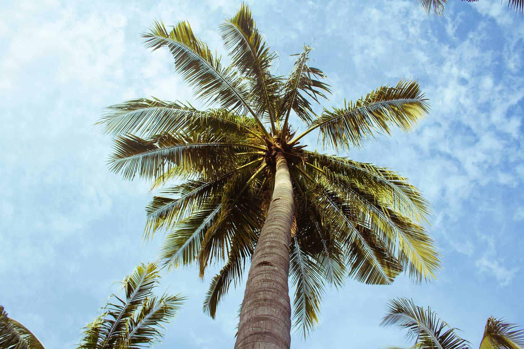 Resor_till_Grenada_Palm_nygren_lind_resebyrå