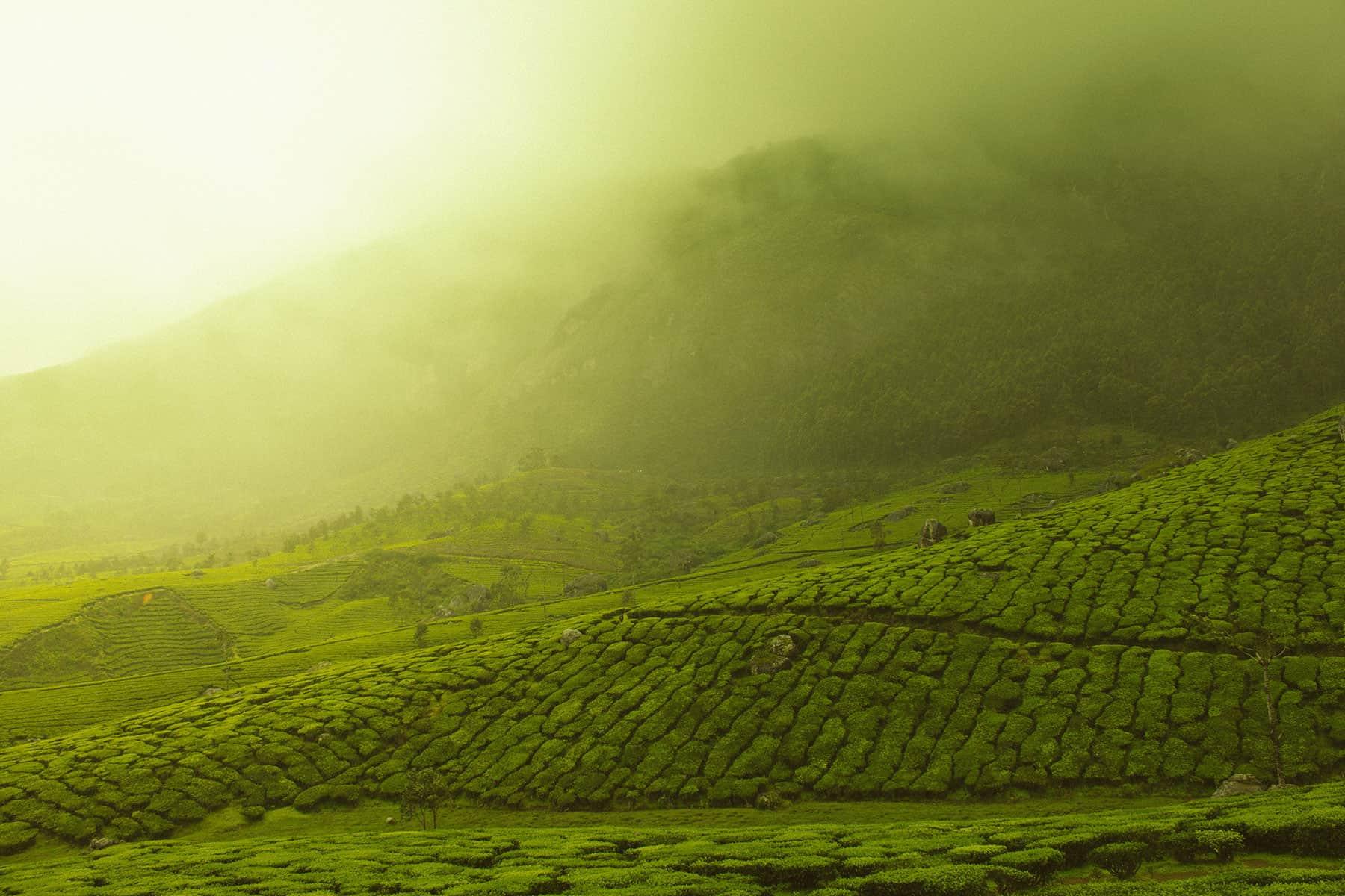 Resor_till_Kerala-i-Indien_med_Nygren_Lind_Resebyrå-1