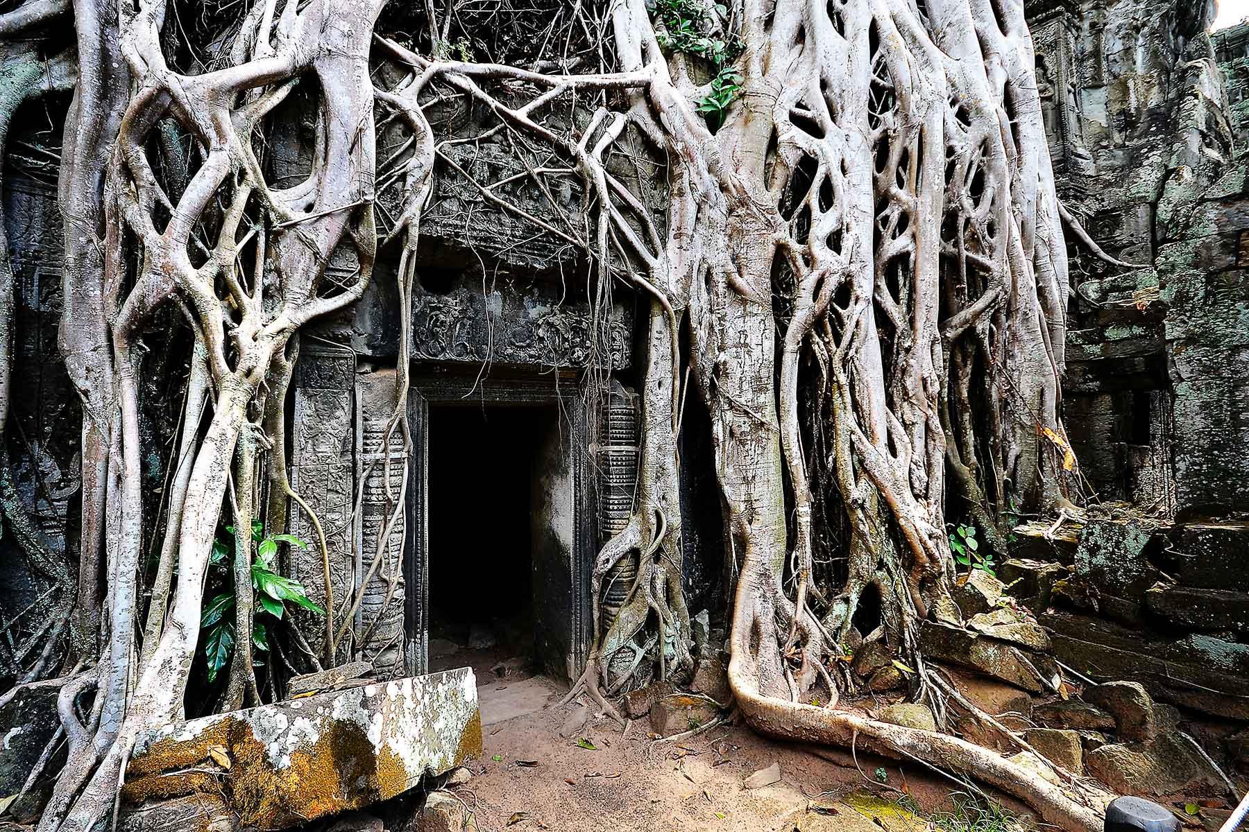 Rundresa-i-Kambodja-med-Angkor-Wat---Nygren-&-Lind-resebyrå---rötter