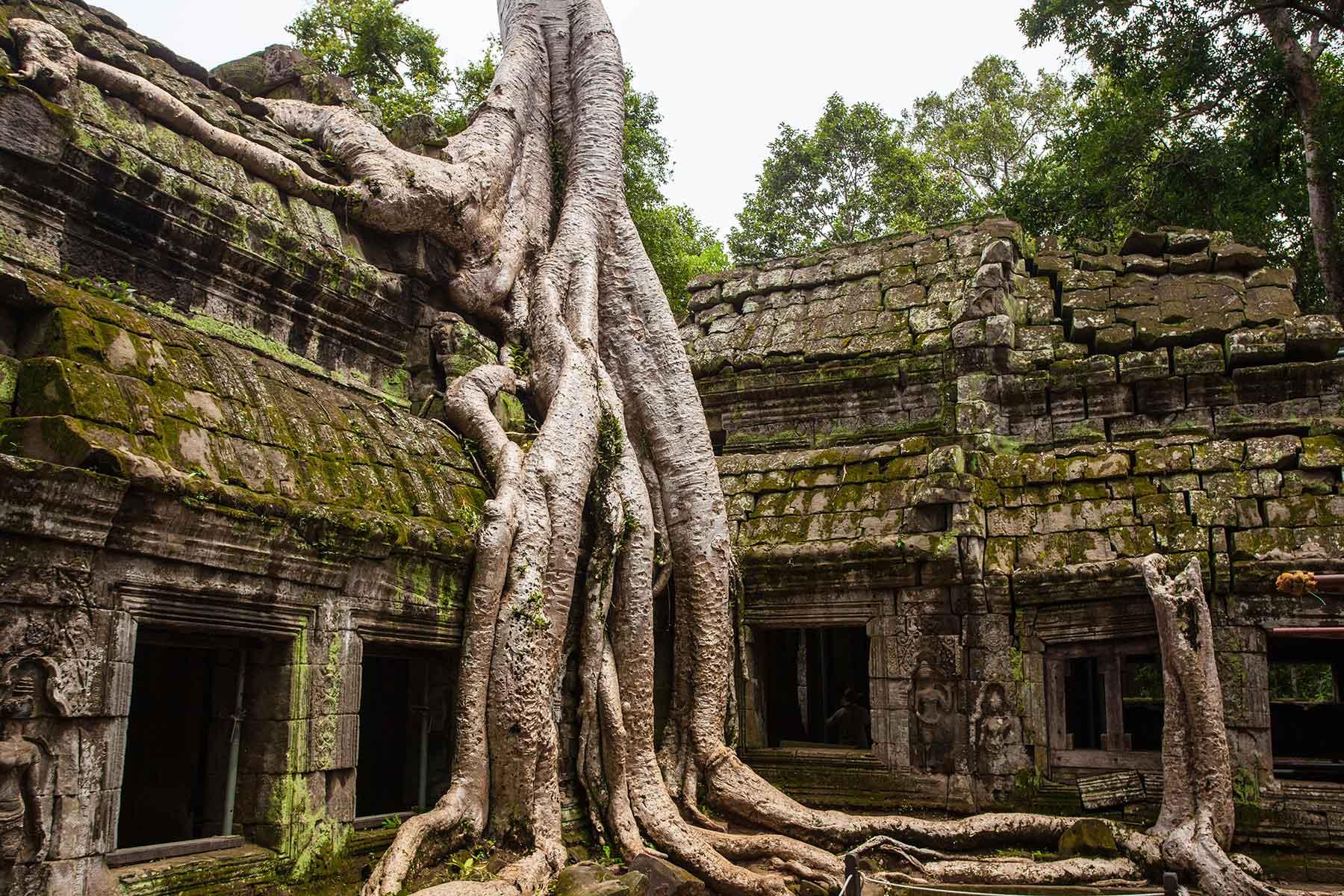 Rundresa-i-Kambodja-med-Angkor-Wat---Nygren-&-Lind-resebyrå---träden