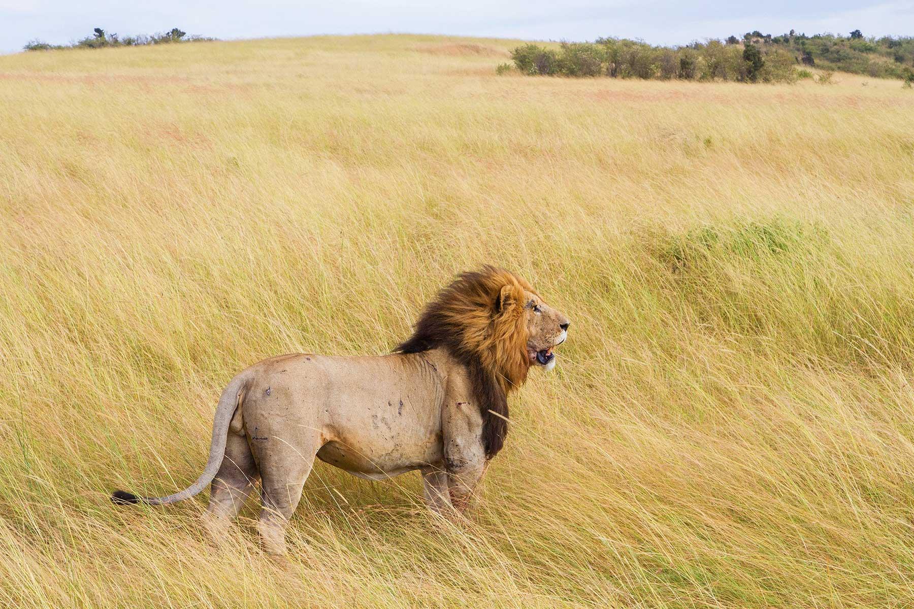 Safari-Kenya-med-boende-på-Entumoto-Camp-hos-Nygren-&-Lind-Resebyrå