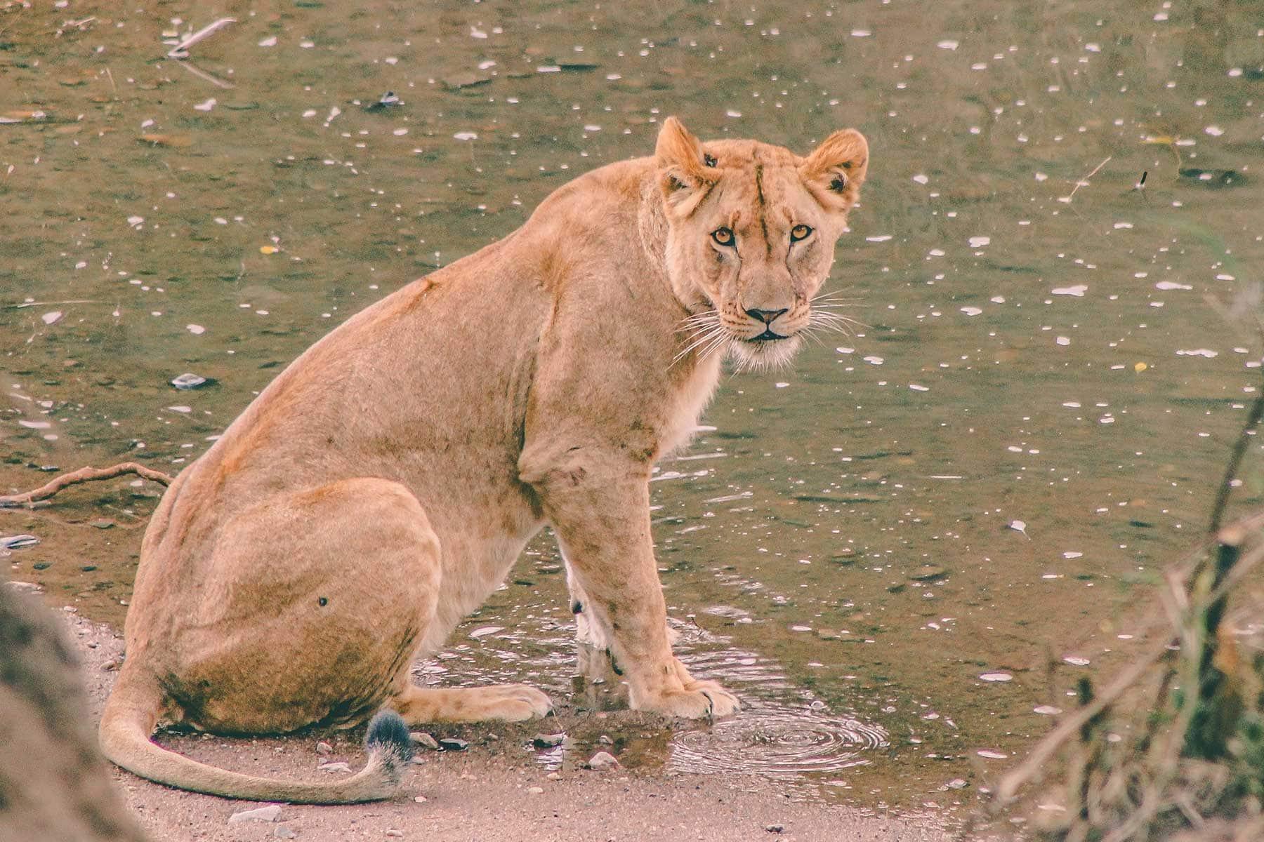 Safari-Kenya-med-boende-på-Entumoto-Camp-hos-Nygren-&-Lind-Resebyrå_2