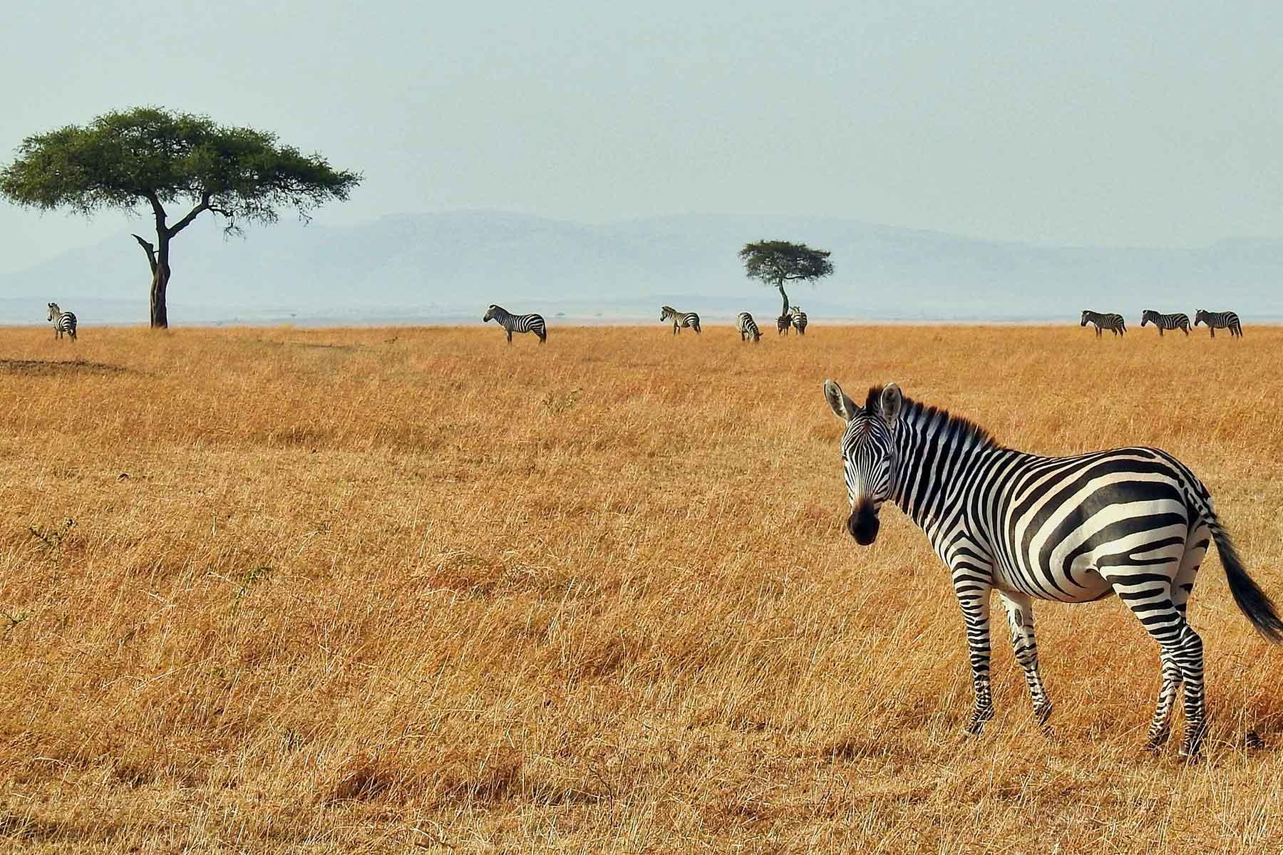 Safari-Kenya-med-boende-på-Entumoto-Camp-hos-Nygren-&-Lind-Resebyrå_5