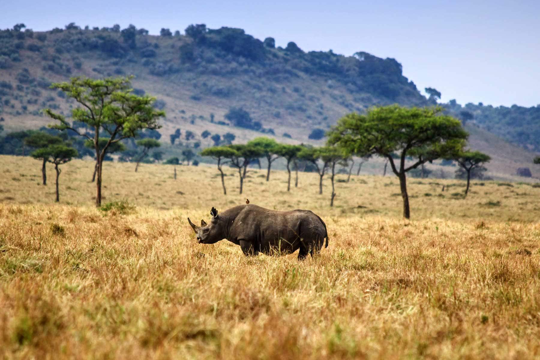 Safari-Kenya-med-boende-på-Entumoto-Camp-hos-Nygren-&-Lind-Resebyrå_7