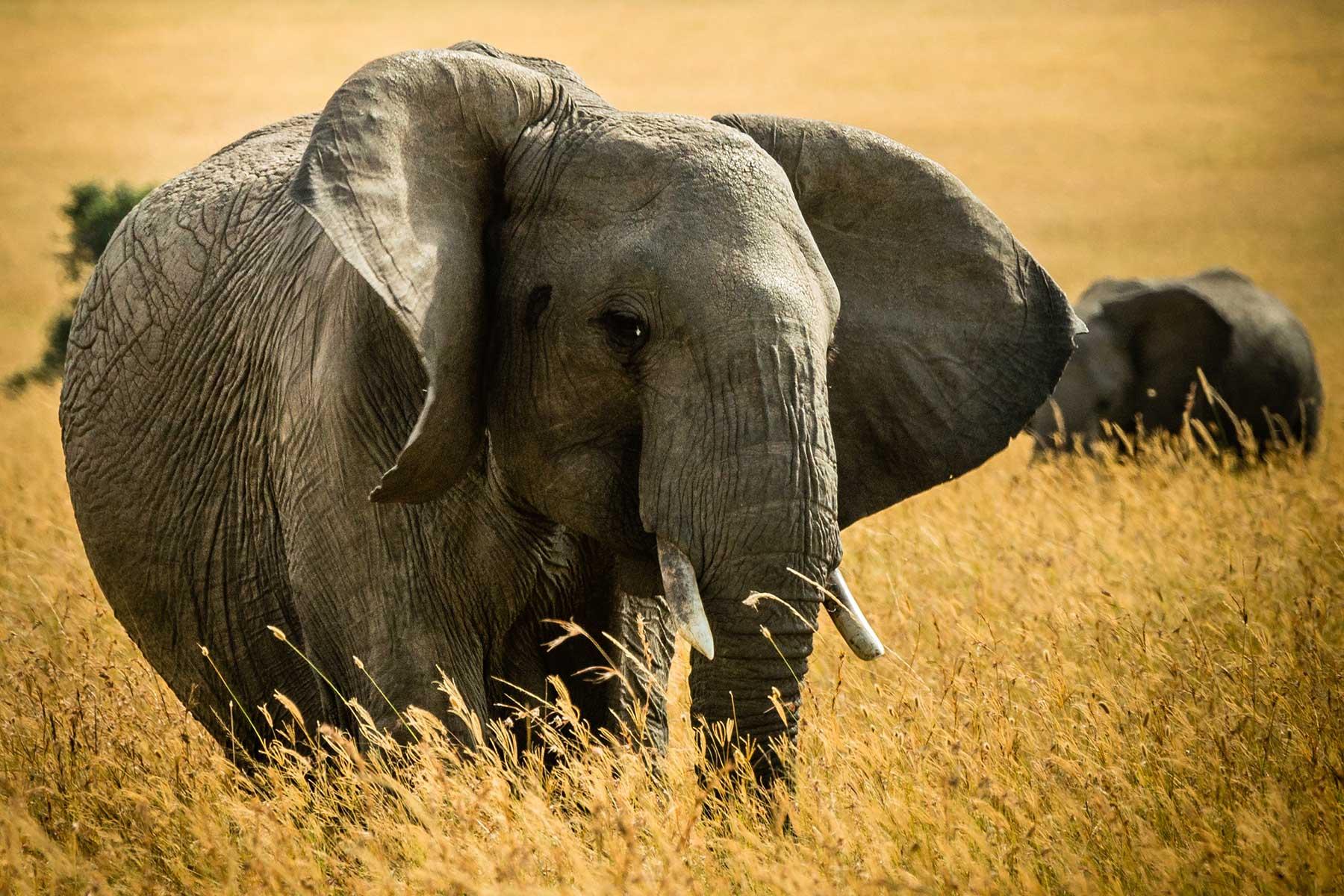 Safari-Kenya-med-boende-på-Entumoto-Camp-hos-Nygren-&-Lind-Resebyrå_8
