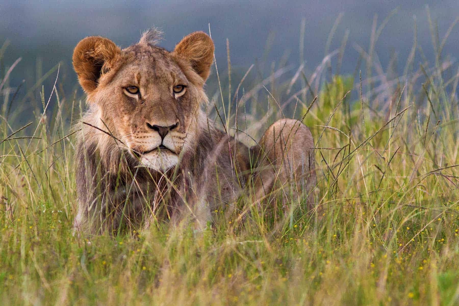 Safariresor-till-Kariega-Games-i-Sydafrika-med-boende-på-Settlers-drift2-med-Nygren-&-Lind-Resebyrå