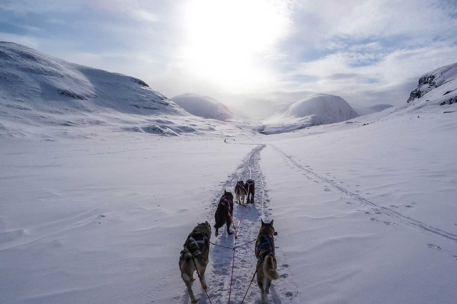 See-Sweden-by-train-Nygren-Lind-Travel-agency---dog-sleigh