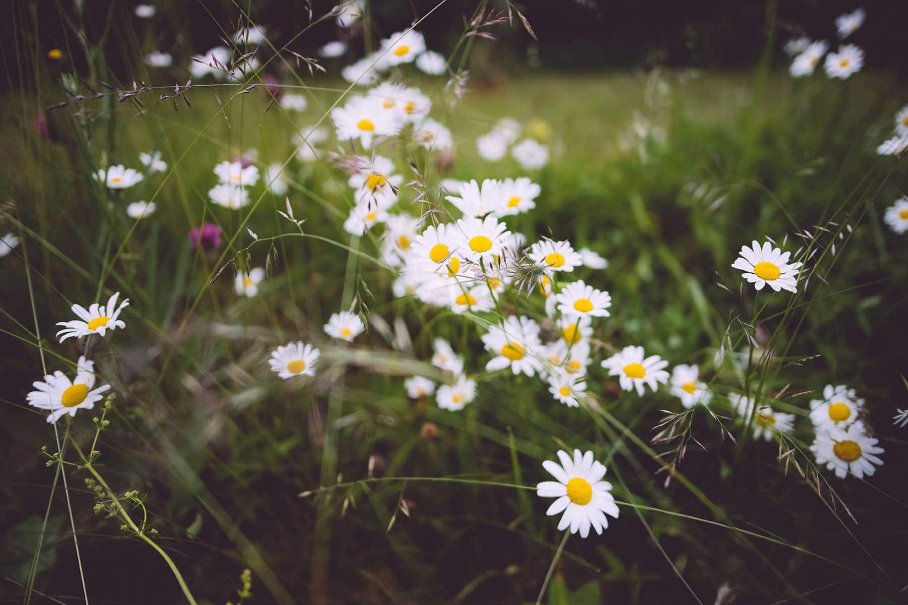 Upplev-floran-Västkusten-i-Sverige-med-Nygren-Lind-Resebyrå