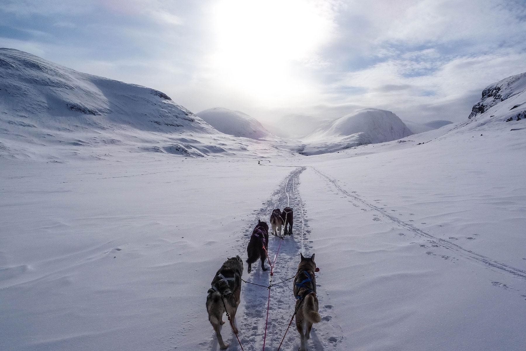 hundsläde-svenska-fjällen-Nygren-Lind-Resebyrå