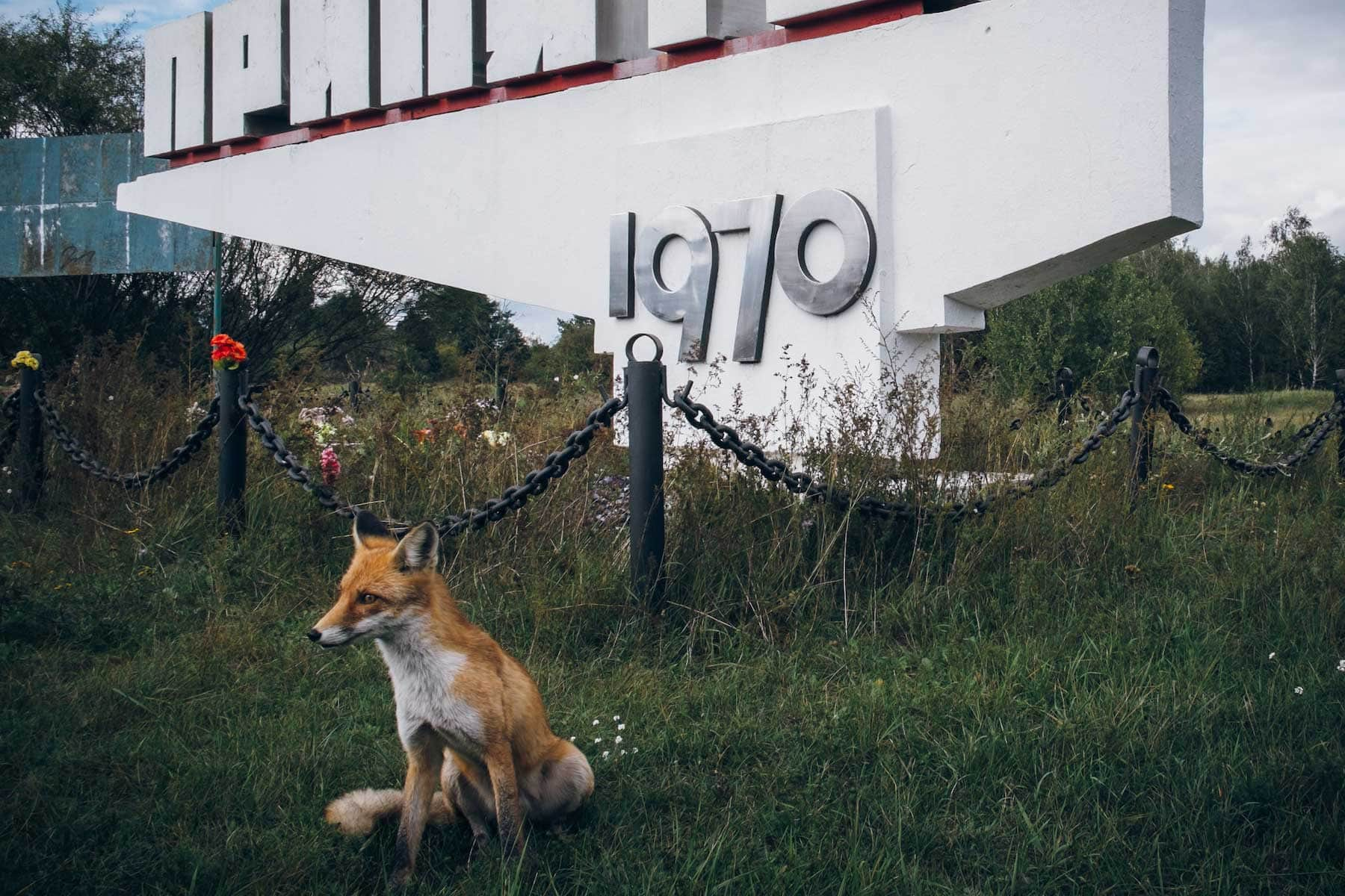 räv-utanför-Tjernobyl-resor-Nygren-Lind-Resebryå