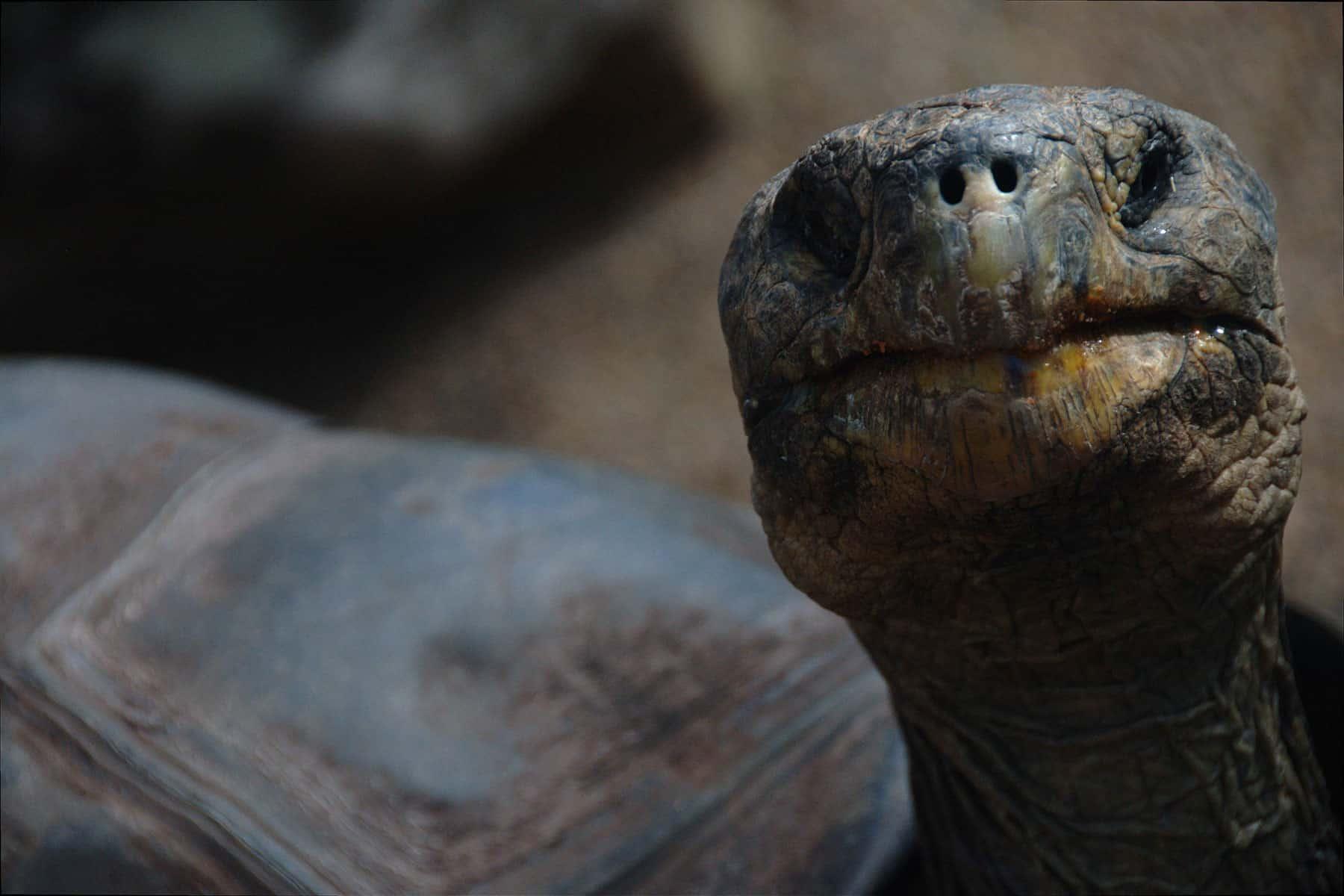 resor_till_borneo_sköldpaddor_med_nygren_lind_resebyrå