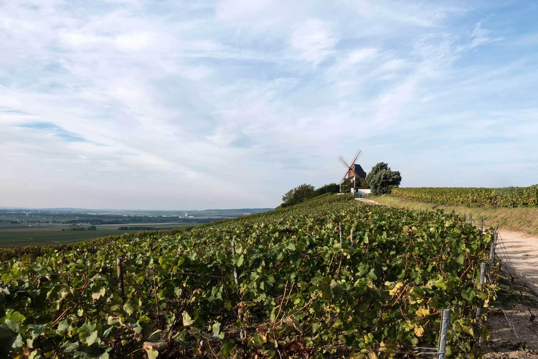 rundresa-champagne-ardenne-Nygren-Lind-Resebyrå-vingård
