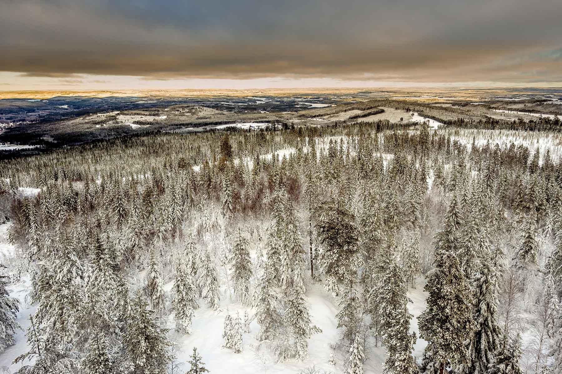 svensk-skog-Nygren-Lind-Resebyrå