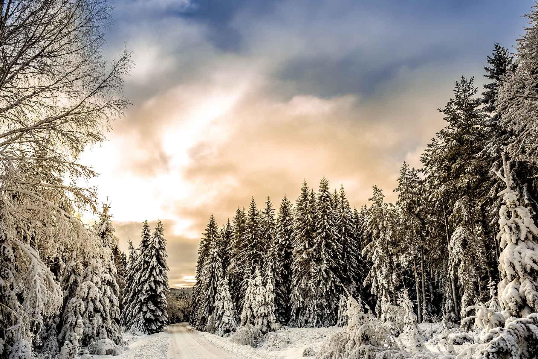 svensk-skog-i-snö-Nygren-Lind-Resebyrå